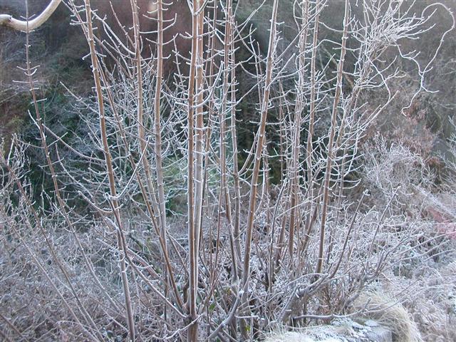 Winter frost 2