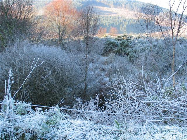 Winter frost 3