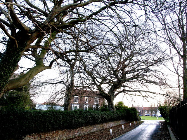 Trees and House at the start of Ivy Lane