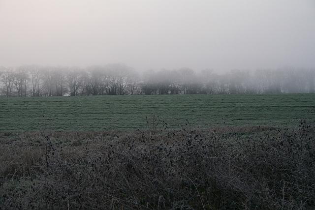 Trees in the Pre-Dawn Mist