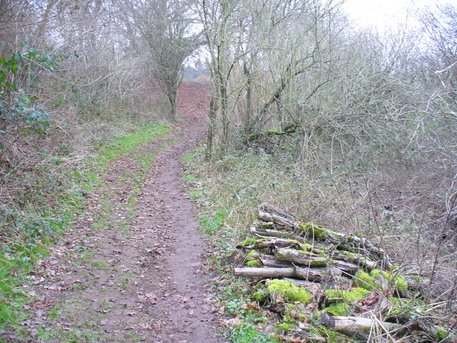 Woodland Path to Chantries