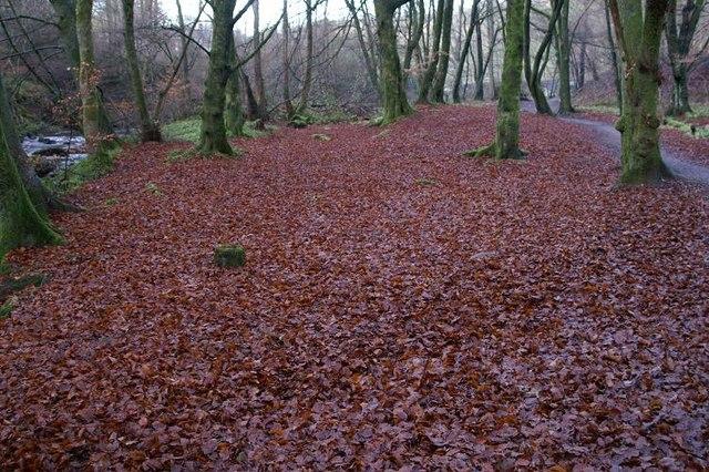 Copper Carpet, Den of Alyth