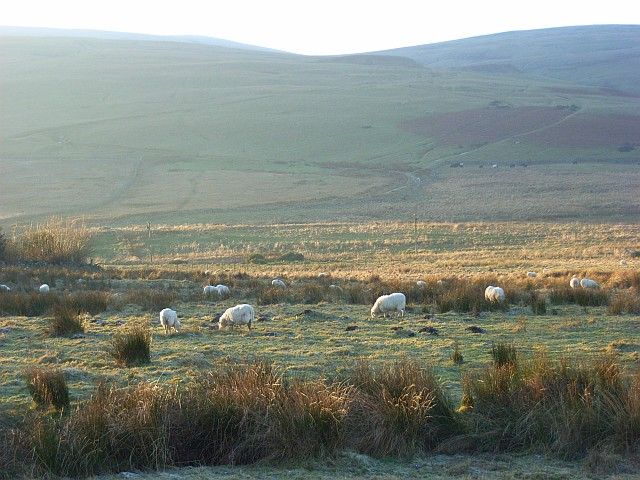 Pastures, Nether Row