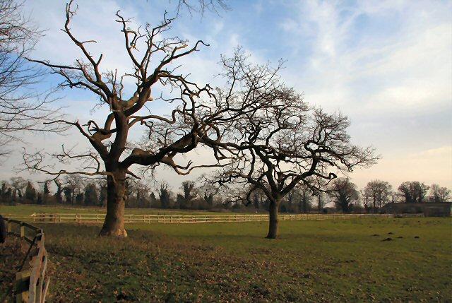 Trees at South Wood
