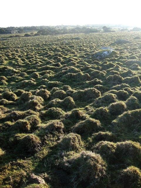 Grass tussocks, East Moor
