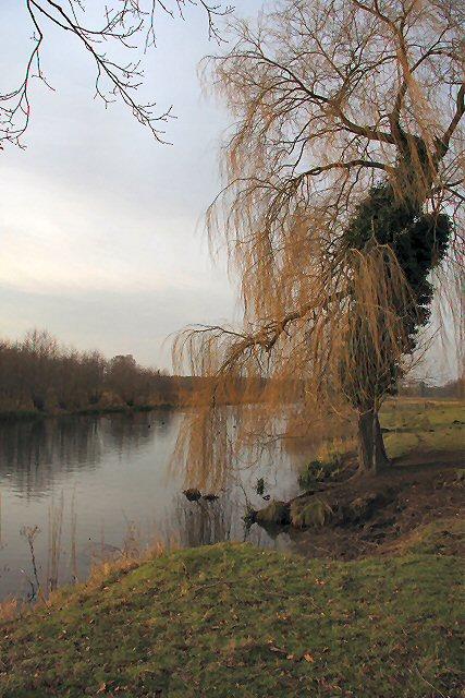 Culford Lake and tree