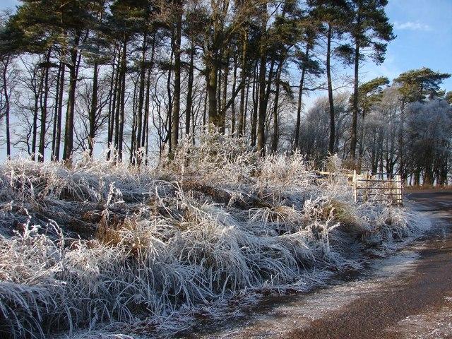 Frosty Weather (1)