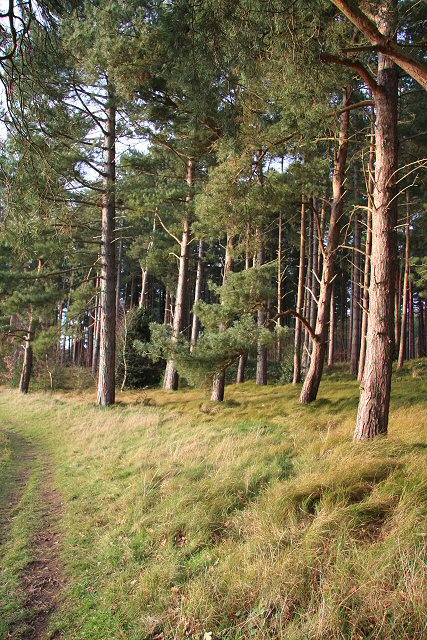 Trees at West Stow Heath