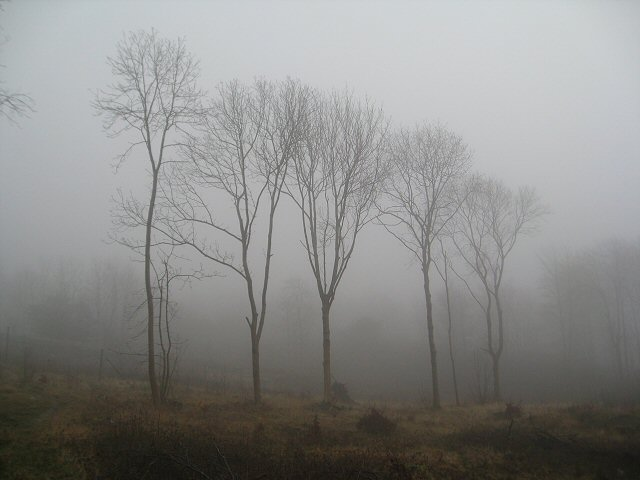 Trees in the mist, Dalton Crags