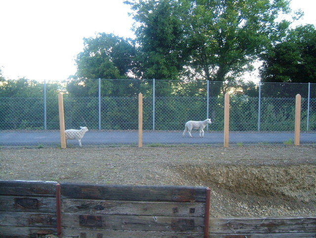 Late Spring Lambs!