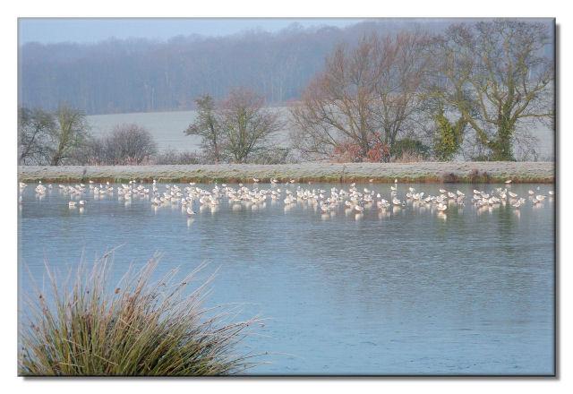 Birds standing on the ice.