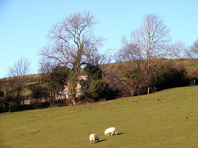 Ewes at the Fron