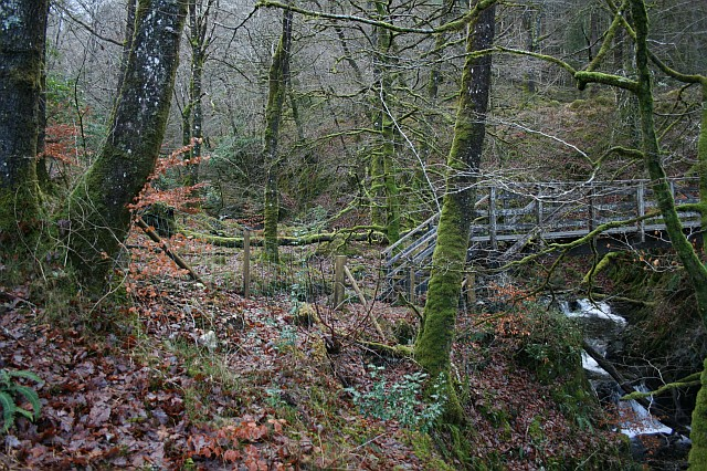 Winter Woodland in Glen Creran