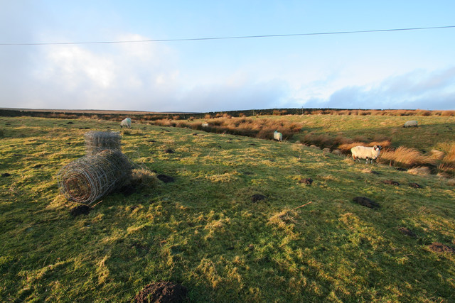 Fencing wire and sheep, Higher Intake