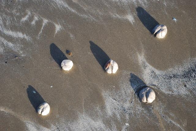 Tatws Môr Dydd Nadolig 2007 Traeth y Greigddu– Sea Potatoes Christmas Day 2007  Black Rock Sands