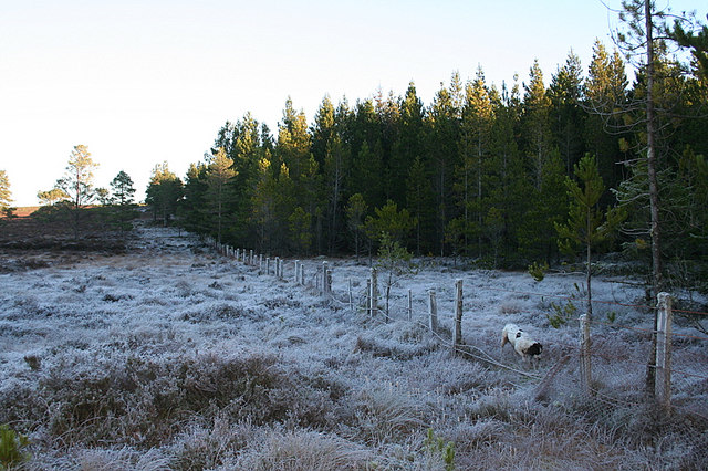 Frosty woodland of the Moss of Faebuie