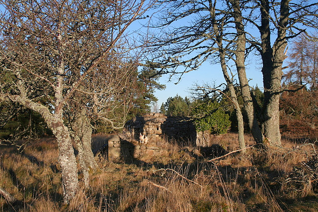 Abandoned croft house on Moss of Dunphail