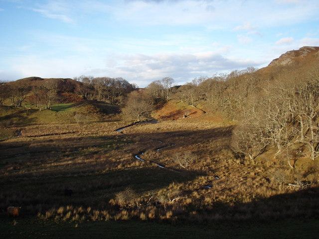Oak Woodland at Kernsary