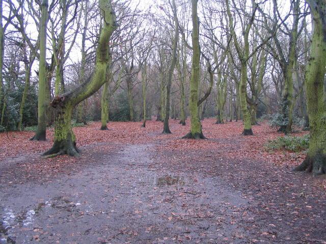 Hearsall Common, wet underfoot
