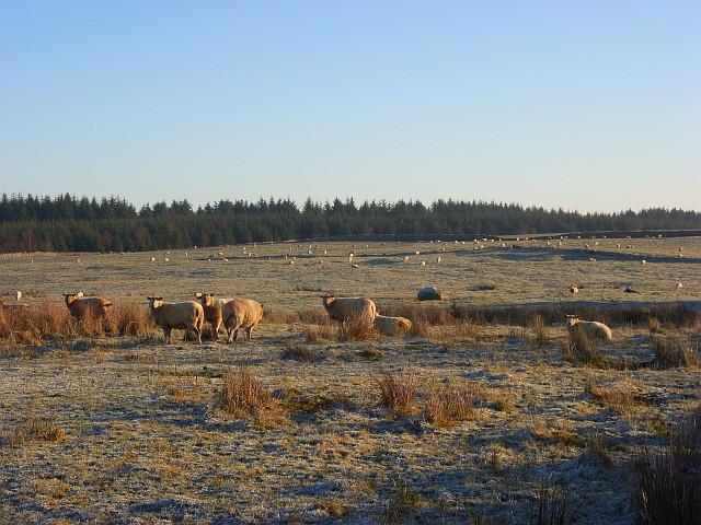 Pasture, Berrier