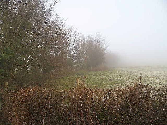 Hedgerows, Weston
