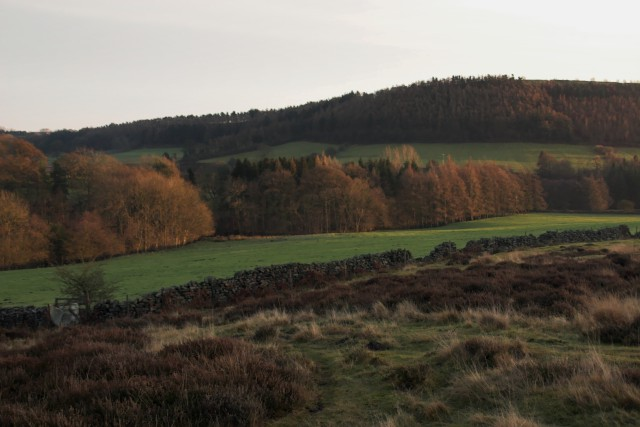 Fields and woods near Fairy Call Beck