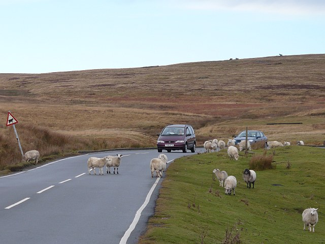 Motorists and Sheep, Rhymney and Bedwellty Common