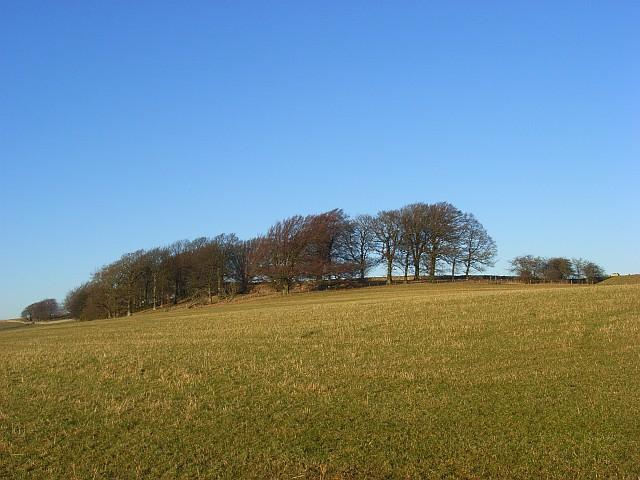 Woodland above Berrier
