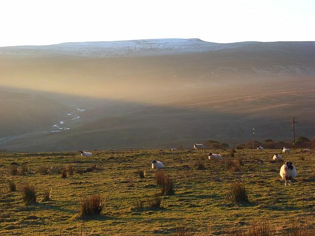 Pasture near Alston
