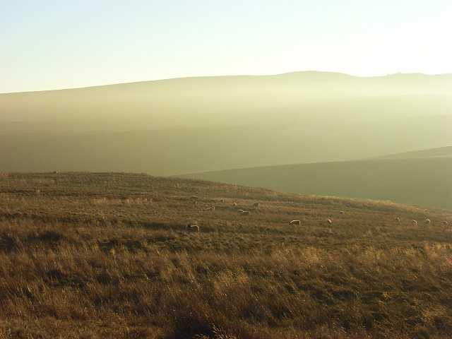 Moorland above Rowgill Burn
