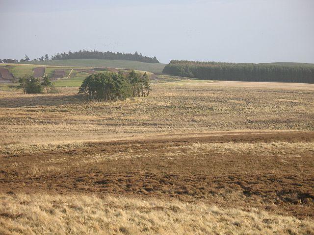 Henlaw Bogs