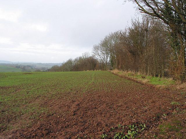 Field by the bridleway, N of Hoarwithy
