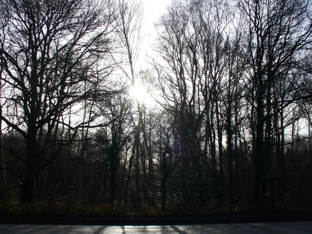 Salt Box Road Woodland