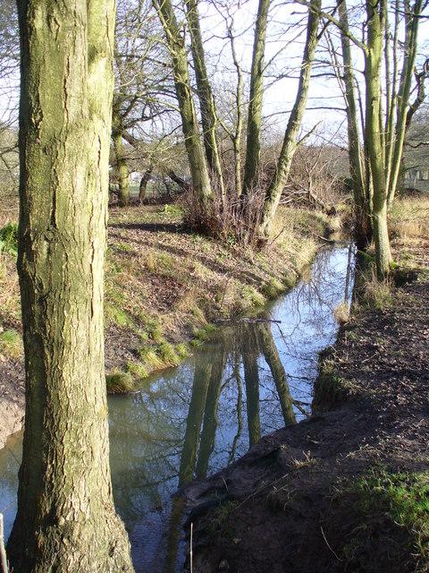 Whitmoor Common Stream