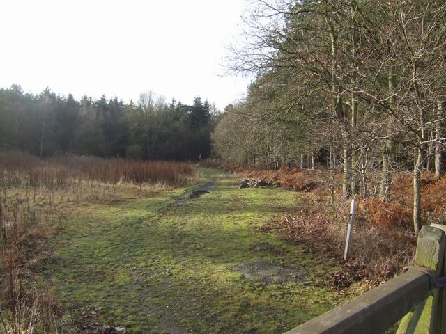 Somerford Wood