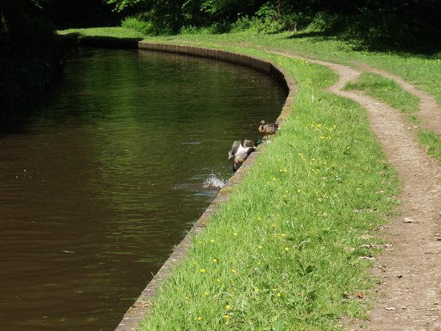 Llangollen Canal at Trevor