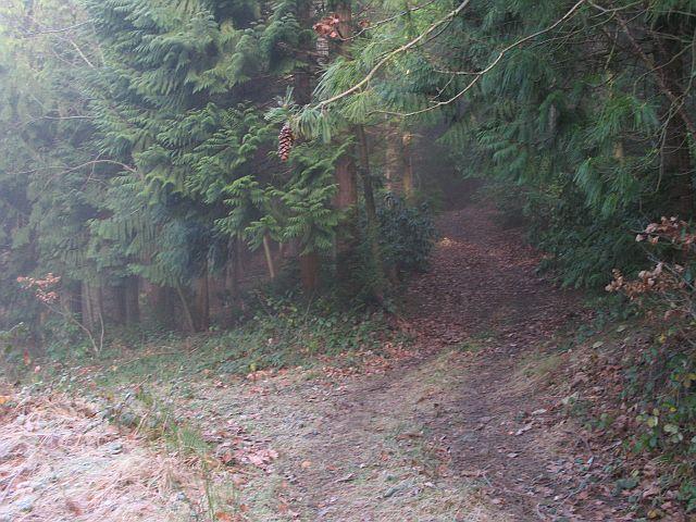 Park Bank Wood