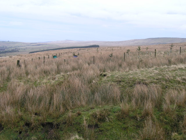 Infant plantation on High Pasture