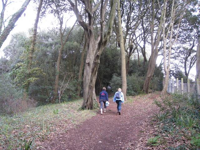 The Ness Shaldon - wooded peak