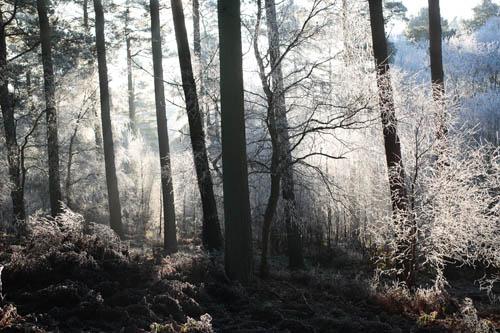 Fans Loanend Wood in winter