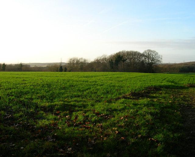 Field, Russell's Green