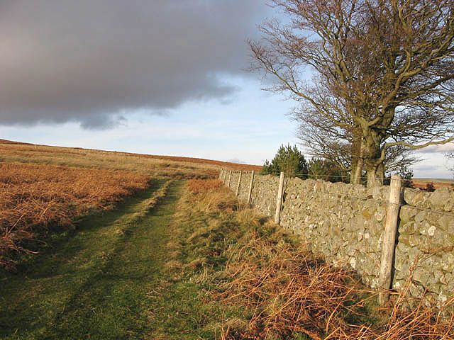 A grass track and drystone wall