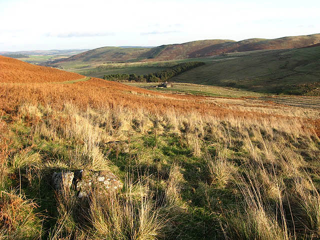 Rough grazing and bracken at Turf Knowe