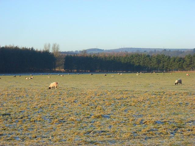 Pasture, Edenhall
