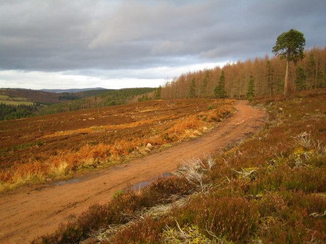 The Firmounth Road climbing out of Glen Tanar