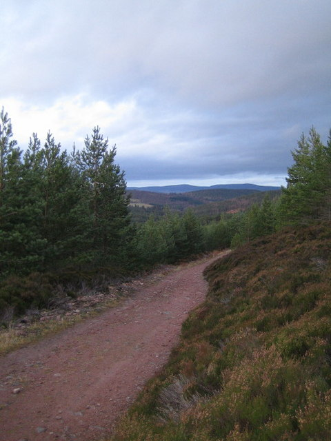 The Firmounth Road climbing through commercial forestry