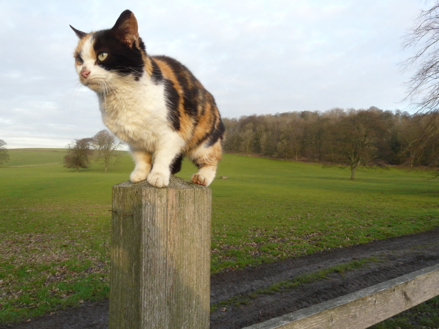 Friendly kitten at Hellifield Peel