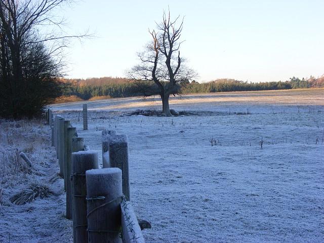 Pastures, Udford