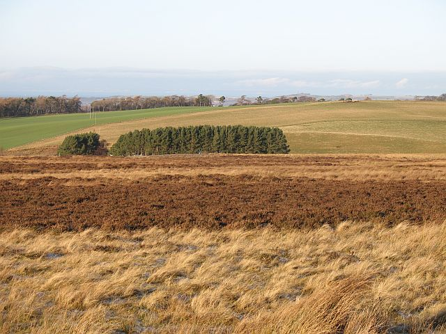 Moorland near Darent House