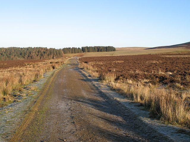 Track towards Snawdon Wood